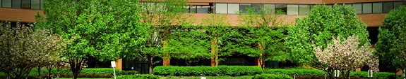 Commercial Landscaping and Landscape Design services by Captive Landscapes of Atlanta, GA